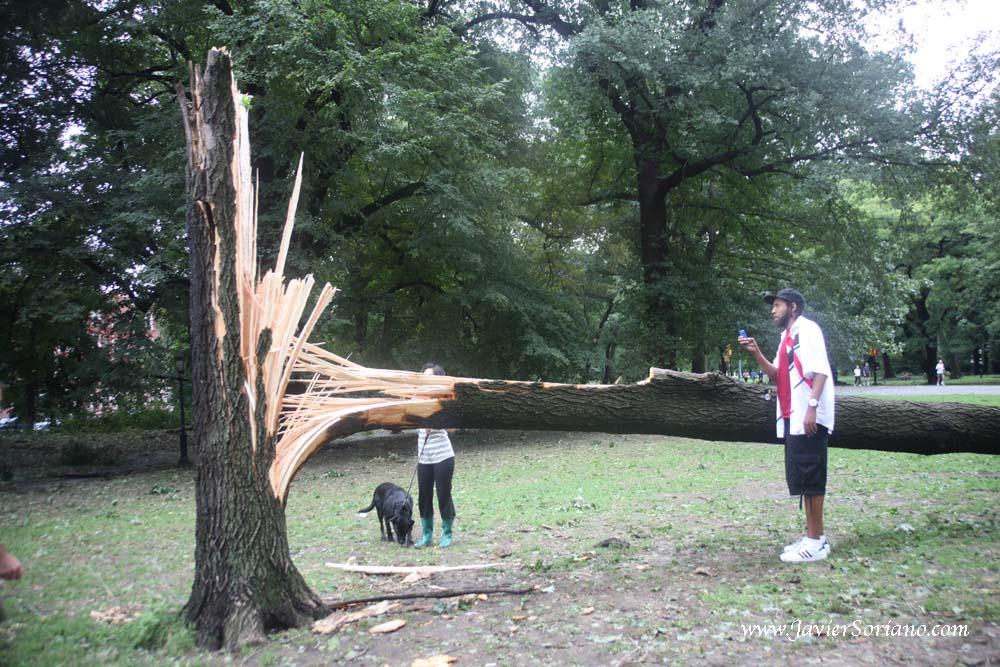 8/31/2011. Brooklyn, NYC.  Hurricane Irene in Prospect Park.   Photo by Javier Soriano/www.JavierSoriano.com