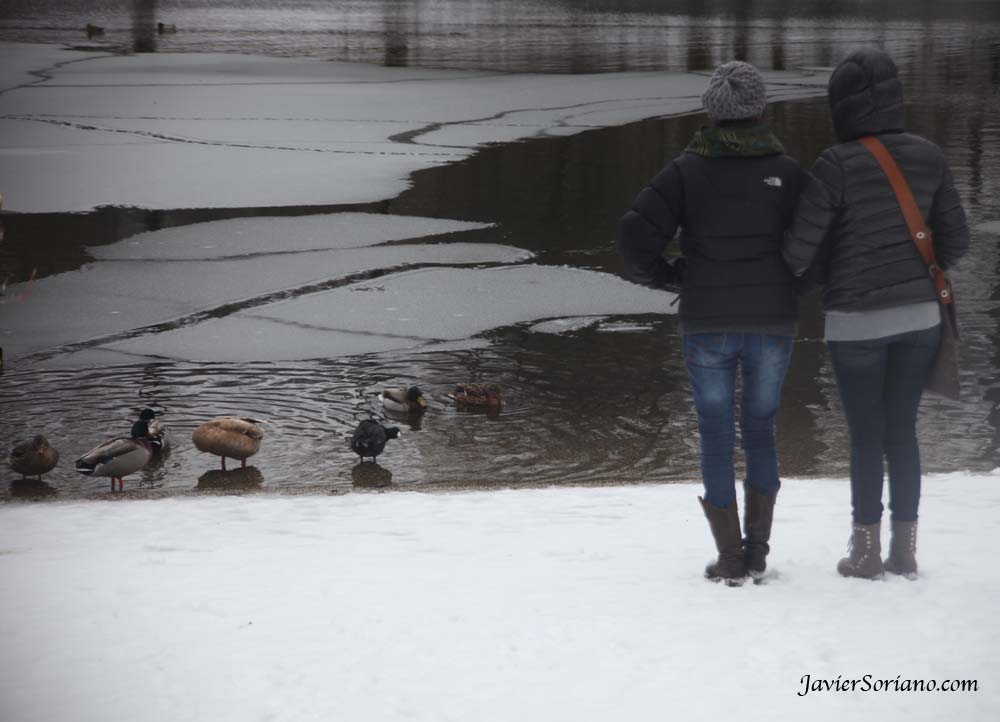 1/21/2012. Prospect Park. Brooklyn, New York City. First snowfall of the 2012-2013 Winter season. Women observing ducks in the lake. Photo by Javier Soriano/www.JavierSoriano.com