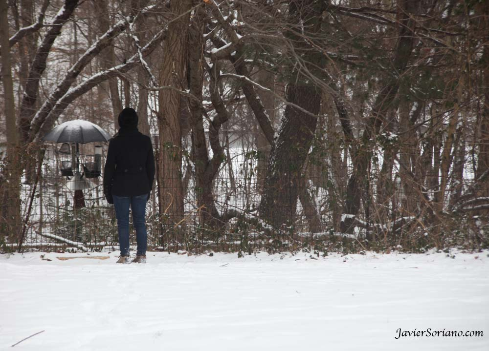 1/21/2012. Prospect Park. Brooklyn, New York City. First snowfall of the 2012-2013 Winter season. A woman observing birds. Photo by Javier Soriano/www.JavierSoriano.com