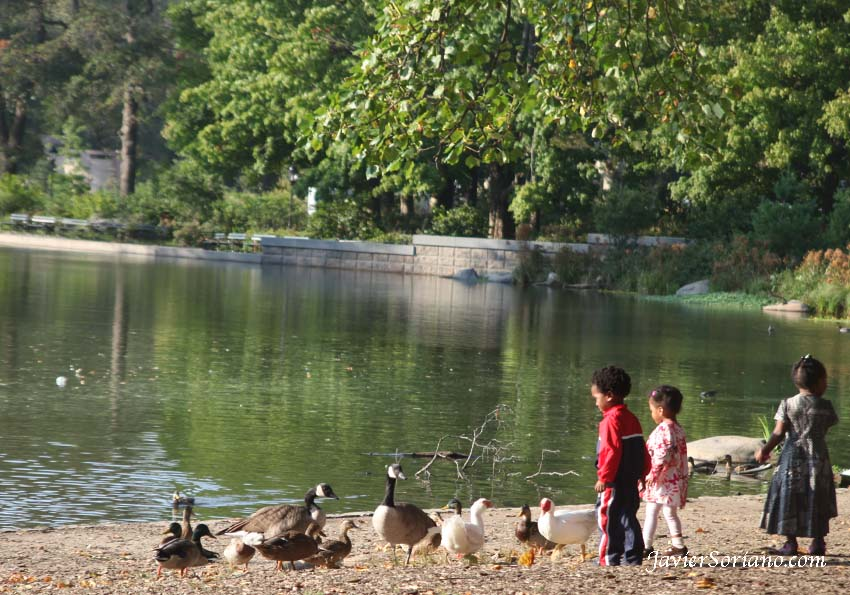 10/11/2012. Prospect Park. Brooklyn, NYC. Children, ducks and Canada geese.  Photo by Javier Soriano/www.JavierSoriano.com