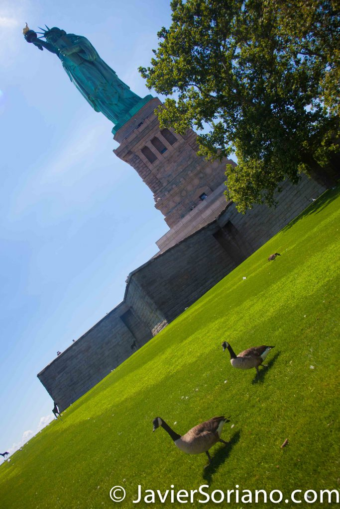 8/03/2016  NYC - Statue of Liberty and Canada Geese.  Photo by Javier Soriano/www.JavierSoriano.com