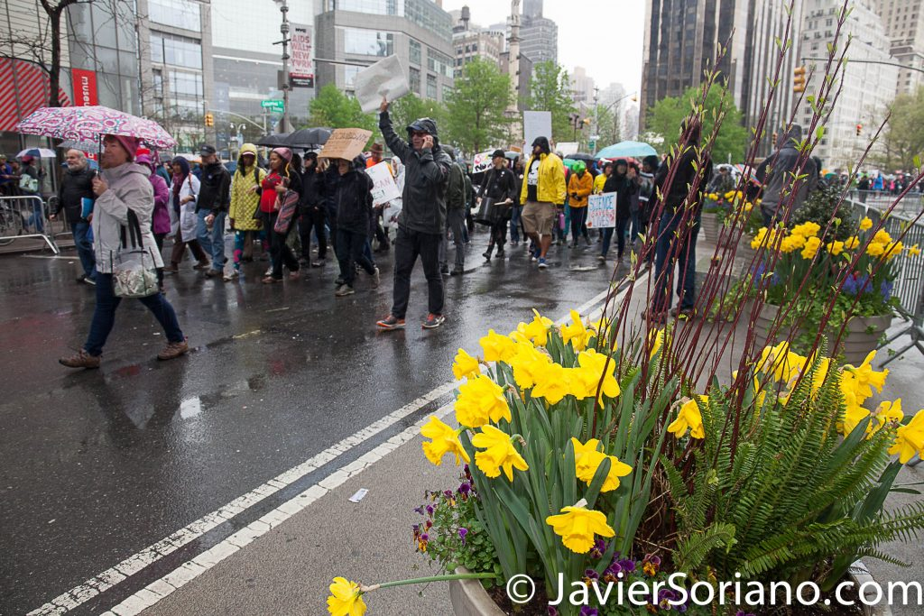 4/22/2017 NYC - March for science. People marching to Times Square.  Today was Earth Day. Beautiful yellow tulips. It was raining. Water is life! Photo by Javier Soriano/www.JavierSoriano.com
