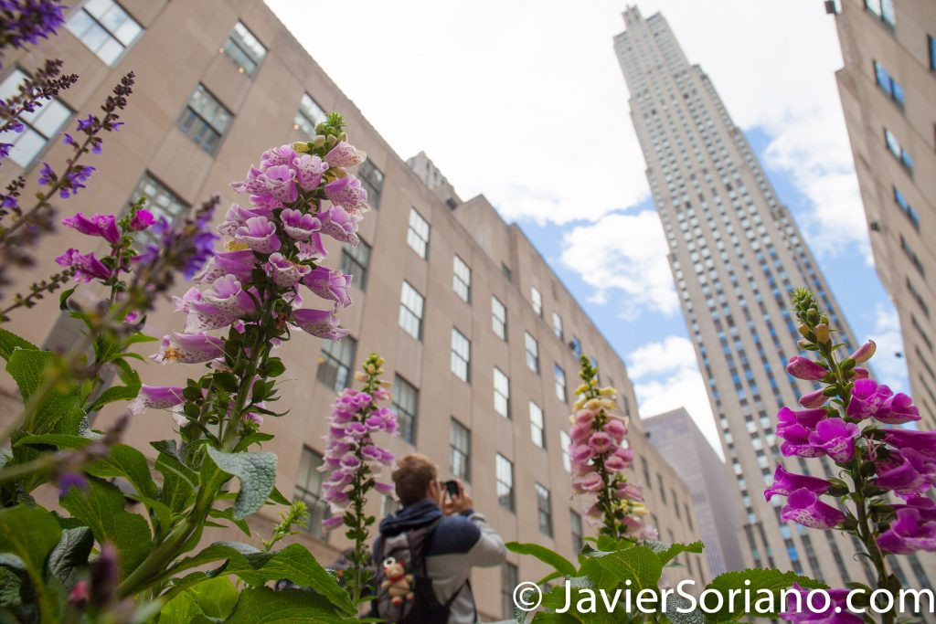 5/15/2017 Rockefeller Center, NYC. Beautiful flowers and a person taking pictures. Photo by Javier Soriano/www.JavierSoriano.com