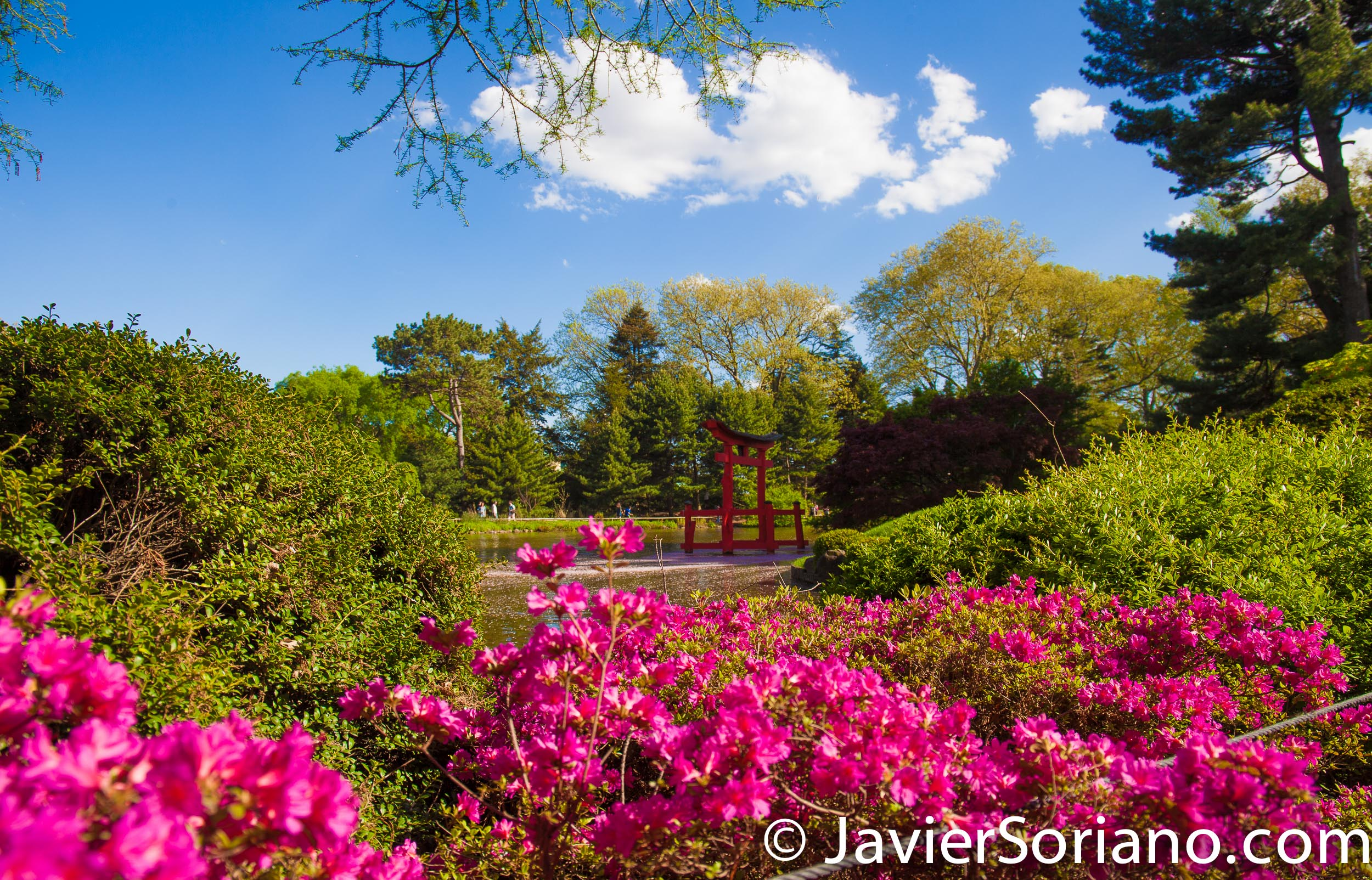 May 2, 2017 NYC - Brooklyn Botanic Garden. Jardín Botánico de Brooklyn. Photo by Javier Soriano/www.JavierSoriano.com