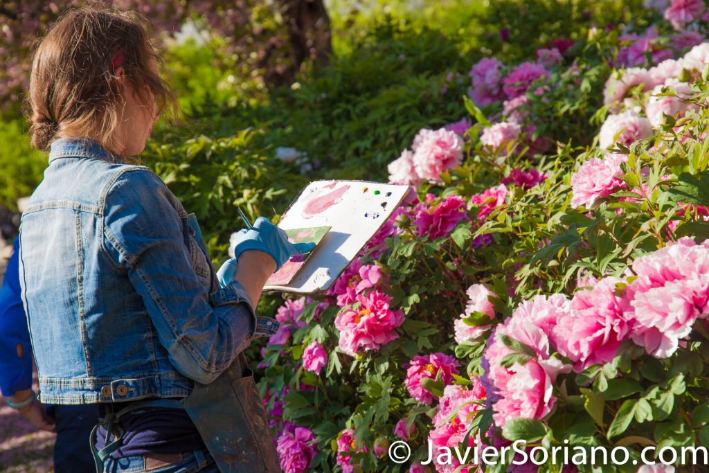 May 2, 2017 NYC - Painter painting a painting of beautiful flowers at the Brooklyn Botanic Garden. Pintor pinta una pintura de flores hermosas en el Jardín Botánico de Brooklyn. Photo by Javier Soriano/www.JavierSoriano.com