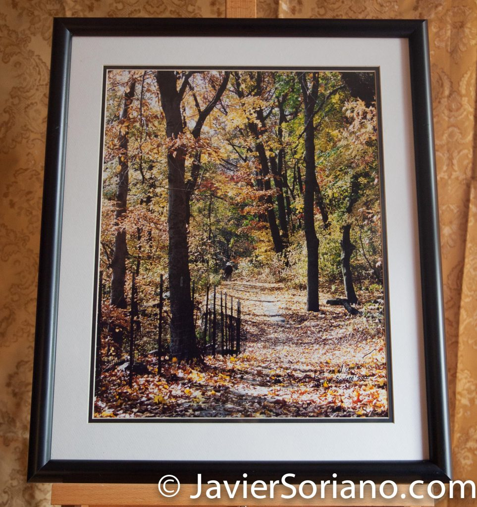 Central Park, NYC. Original framed photograph by Javier Soriano. Size: 24x20.