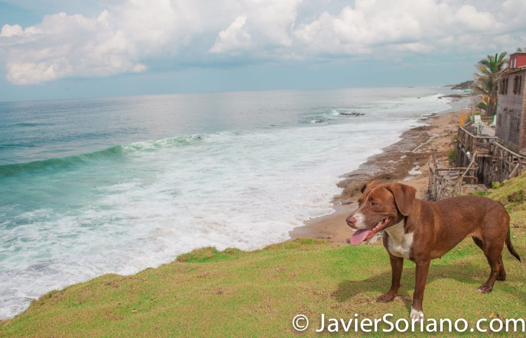 9/14/2017. La Perla, Old San Juan. Puerto Rico.  I met this beautiful female dog in La Perla, Puerto Rico last week. She made me company for a few blocks. I hope she is safe today.  Photo by Javier Soriano/www.JavierSoriano.com
