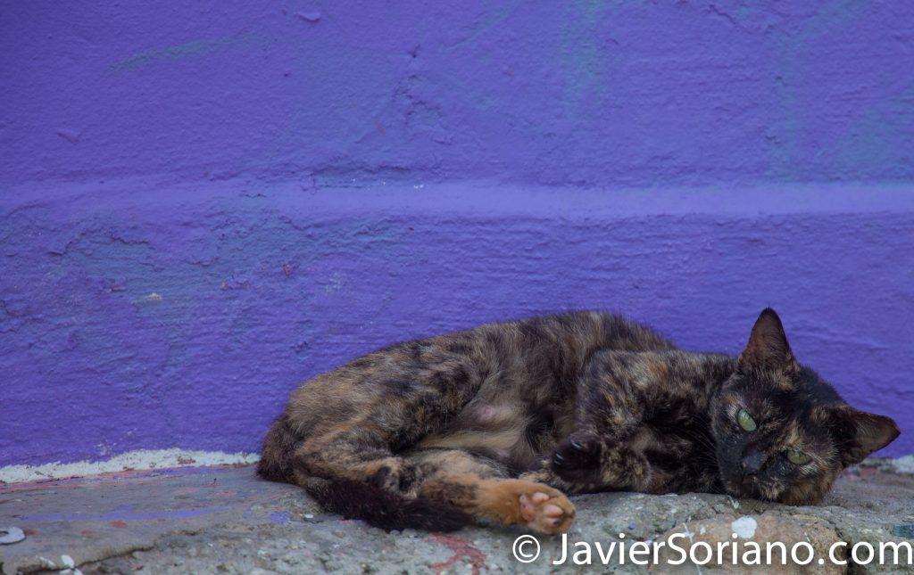 9/14/2017. La Perla, Old San Juan. Puerto Rico.  Hola cat!  Photo by Javier Soriano/www.JavierSoriano.com