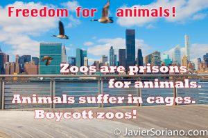 Long Island City. Queens, Ciudad de Nueva York. Gansos canadienses volando. ¡Libertad para los animales! Los zoológicos son cárceles para animales. Los animales sufren en jaulas. ¡No asistas a los zoológicos! ***************** Long Island City. Queens, NYC. Canada geese flying. Freedom for animals. Zoos are prisons for animals. Animals suffer in cages. Boycott zoos! Photo by Javier Soriano/www.JavierSoriano.com