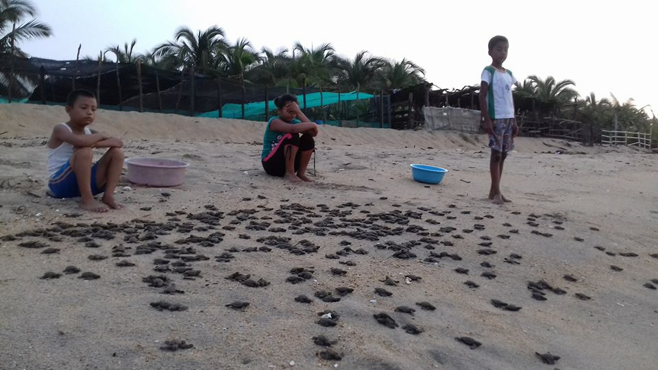 Niños apoyando el campamento tortuguero con la liberación de crías de tortugas. Children helping the turtle camp in the liberation of baby turtles.