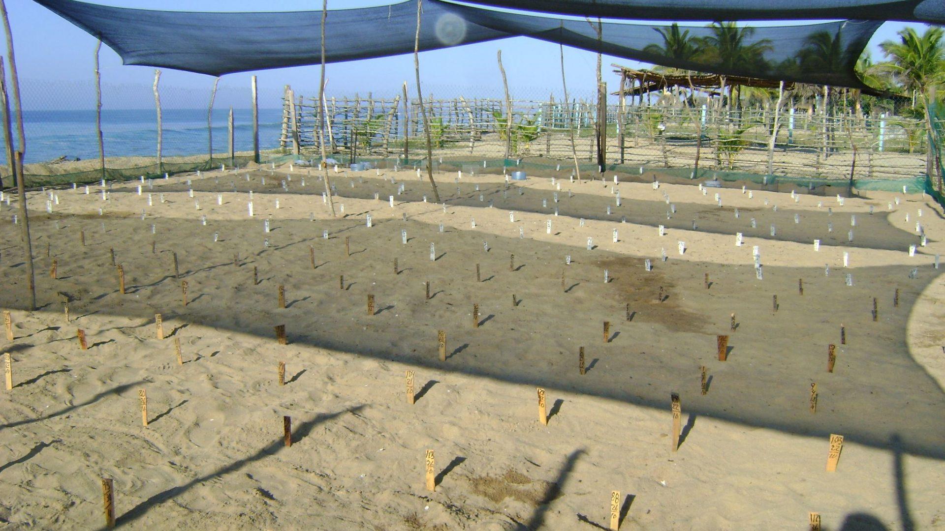 Vivero del Campamento Tortuguero Los Quelonios. Nursery of Turtle camp Los Quelonios. Playa Ventura, Copala. Guerrero, Mexico.