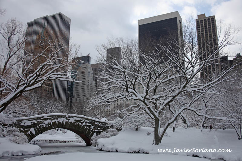 Javier Soriano: Brooklyn - Central Park snow photos 2011
