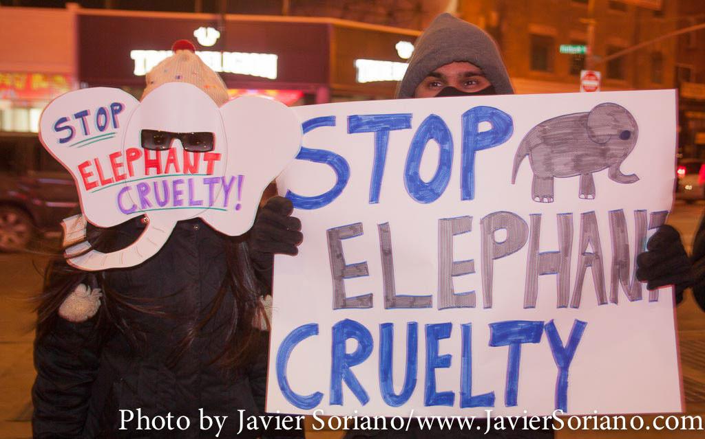 19/2/2015 NYC – Activistas por los derechos de los animales en el Barclays Center de Brooklyn, protestan contra el Ringling Bros y Barnum y Bailey Circus por el uso y abuso de animales.
