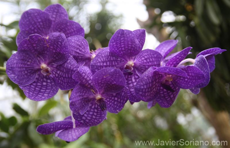 Mayo 2011 - Hermosas flores en el Jardín Botánico de Brooklyn. Nueva York. Foto por Javier Soriano/www.JavierSoriano.com