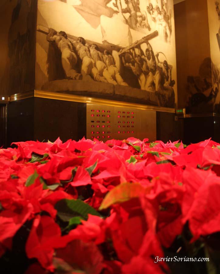 Miércoles 12 de diciembre de 2012.  Manhattan, Ciudad de Nueva York – Cuetlaxochitl o Flor de Nochebuena en el Rockefeller Center.  Foto por Javier Soriano/www.JavierSoriano.com