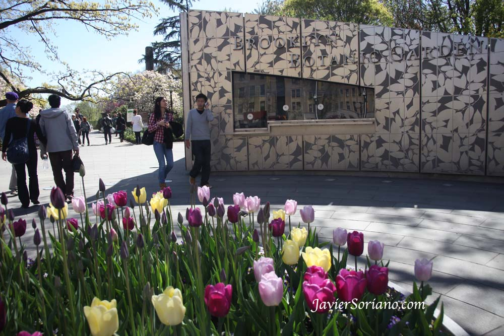 Tuesday, April 30, 2013. New York City – Tulips. Brooklyn Botanic Garden.  Martes, 30 de abril, 2013. Ciudad de Nueva York – Tulipanes. Jardín Botánico de Brooklyn.  Photo by Javier Soriano/www.JavierSoriano.com