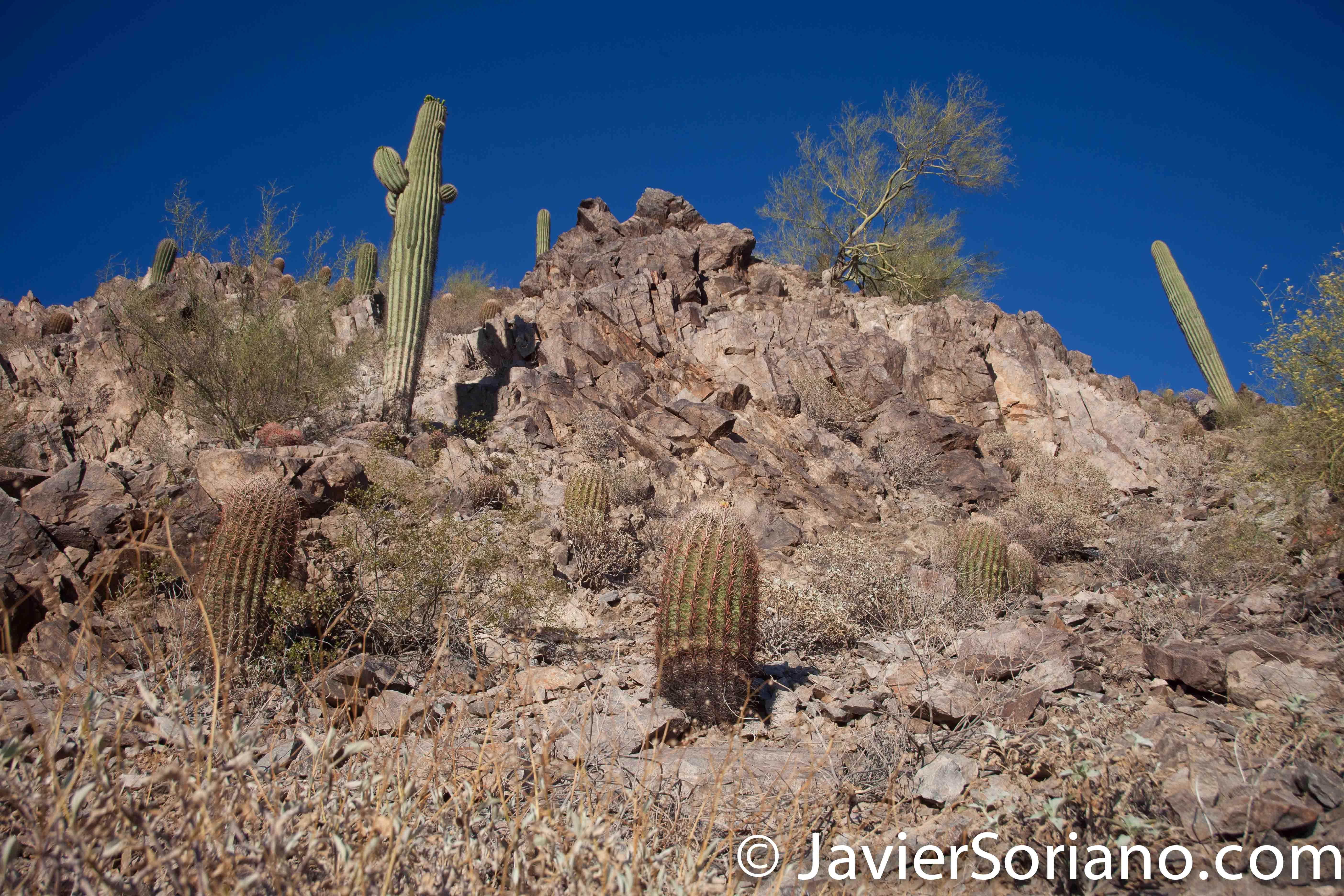 4/17/2016 Arizona's Desert. Photo by Javier Soriano/www.JavierSoriano.com