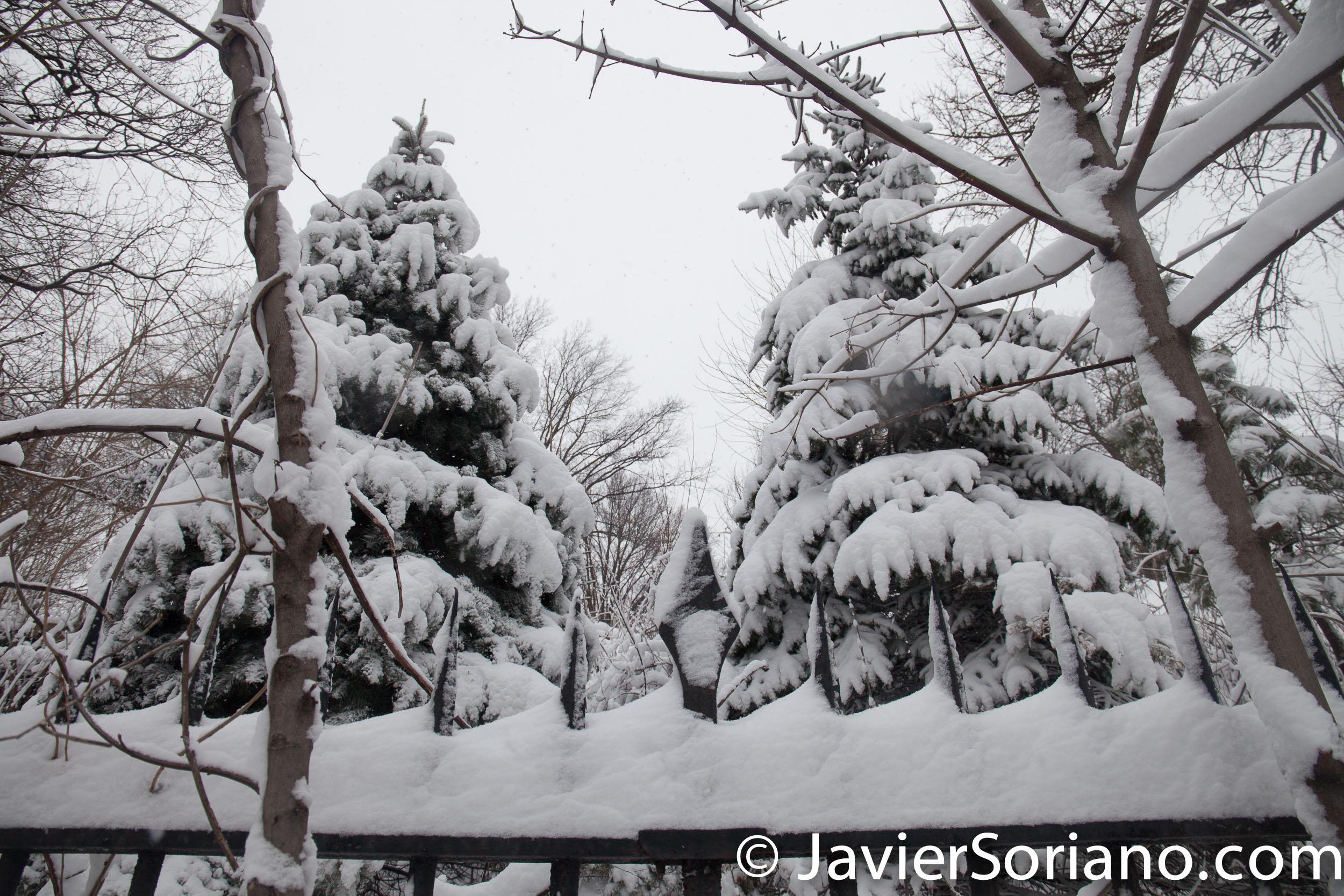 Afternoon. 2/9/2017 NYC - Winter storm Niko. Brooklyn Botanic Garden. Photo by Javier Soriano/www.JavierSoriano.com