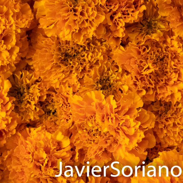 Flor de Cempazúchitl (in English Mexican marigold or Aztec marigold).