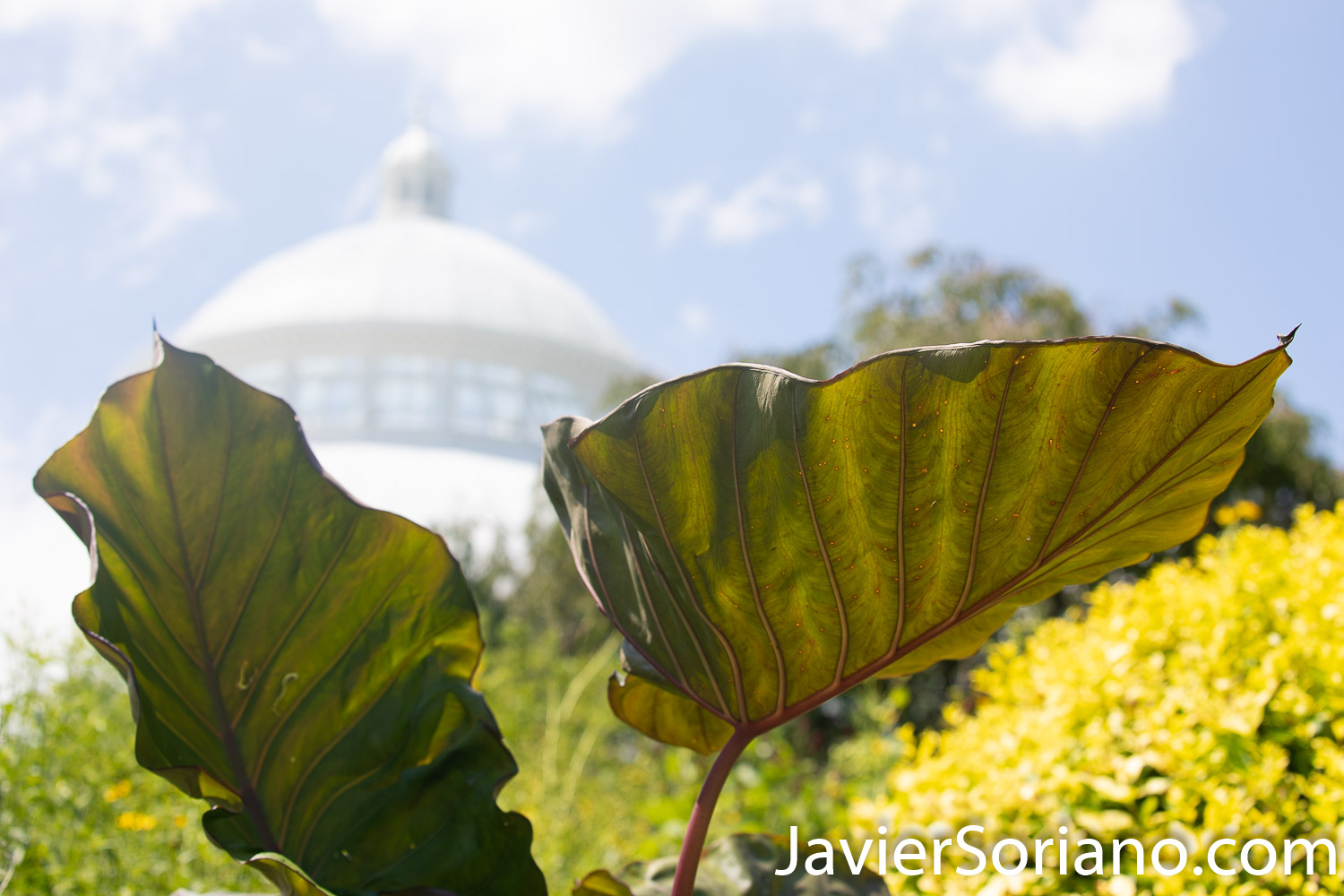 Wednesday, August 5, 2020. New York City – The New York Botanical Garden in the Bronx closed its doors when the coronavirus pandemic started in New York City. After a few months, the NYBG reopened to the public on Tuesday, July 21, 2020. Photo by Javier Soriano/www.JavierSoriano.com