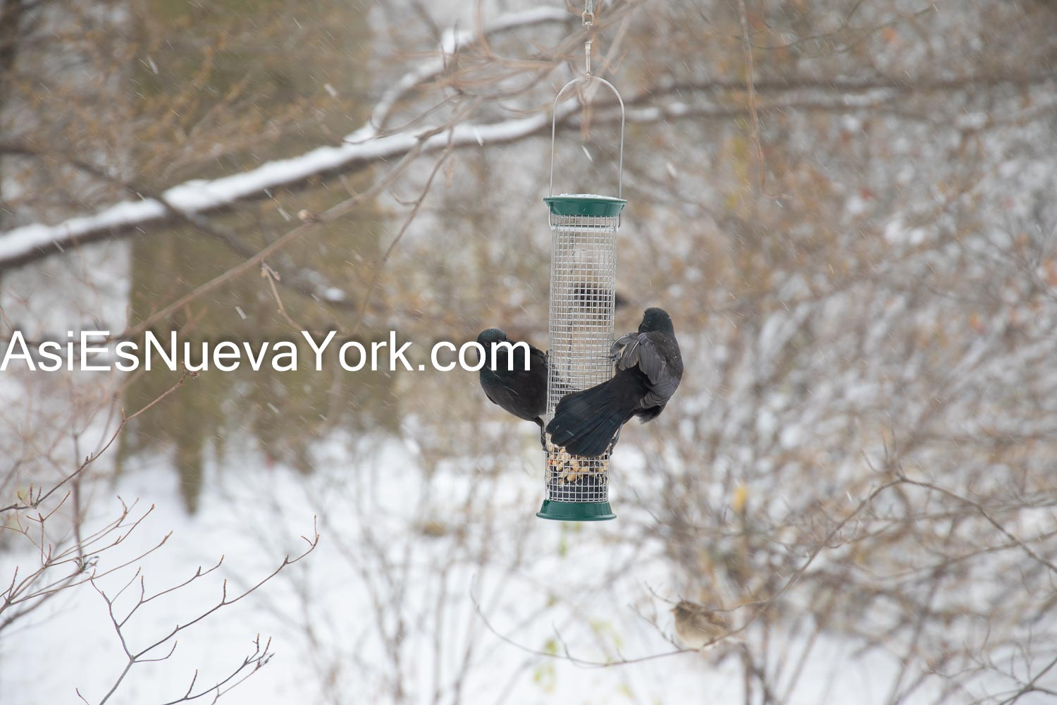 Thursday, December 17, 2020. Manhattan, New York City – Winter storm Gail and birds in Central Park. Photo by Javier Soriano/www.JavierSoriano.com