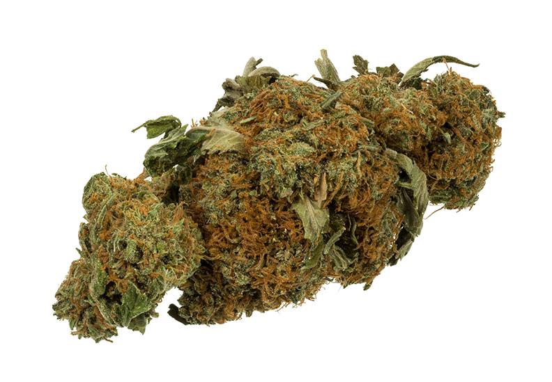 Una cannabis seca, típico de lo que se vende para uso recreativo.  Foto por Evan-Amos /Wikipedia.org